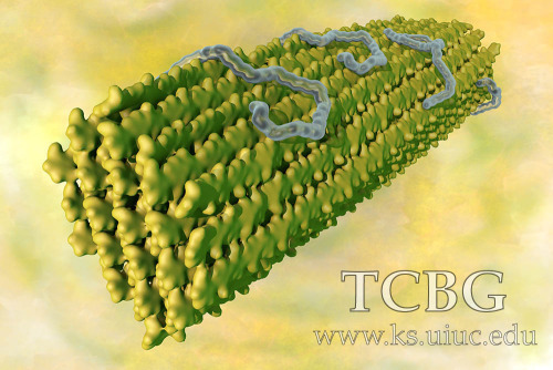 TCBG Calendar 2015 (2).