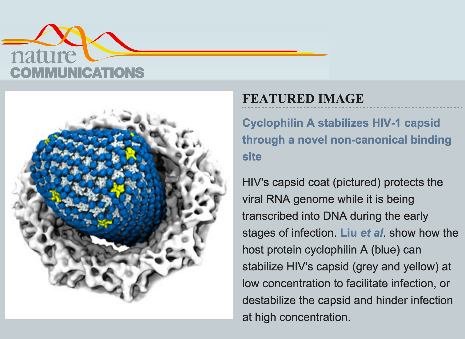 Cyclophilin A stabilizes the HIV-1 capsid through a novel non-canonical binding site.